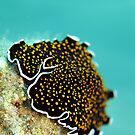Gold dotted flatworm by cooperscuba