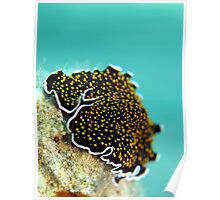 Gold dotted flatworm Poster