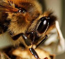Buzz Bee by Amy Dee