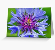 Flowering Insect Greeting Card