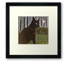 Omar at Dusk Framed Print