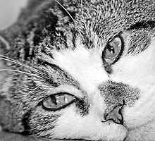 Louie - Black And White  by Laurast