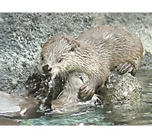Fun and otters Photographic Print