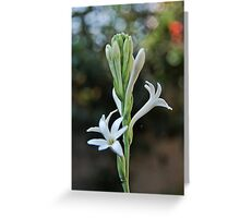 Tuberose Greeting Card