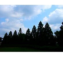 Silhouette Tree Clouds By Jonathan Green Photographic Print