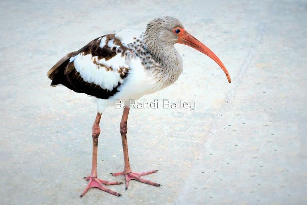Juvenile white ibis by ♥⊱ B. Randi Bailey