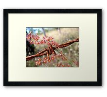 Country Colours Framed Print