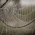 The Web by JimFilmer
