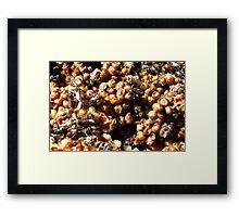 Native Bee Hive Framed Print