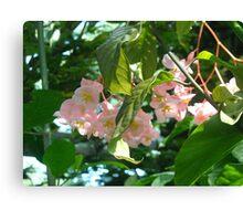 Pretty Pink Petals Canvas Print