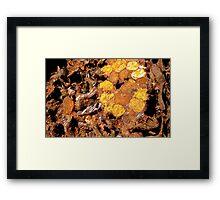 Native Bee Honey Log Framed Print