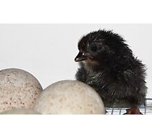 Hatched Chick Photographic Print