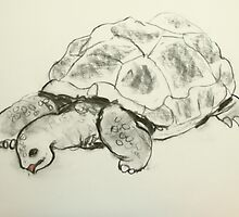 goliath the giant land tortoise by donnamalone