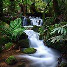 A Lush Cascade by Sean Farrow