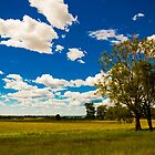 Kurrajong Landscape by Michael Cadelina