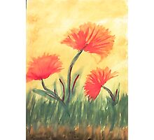 Poppies in the Sun, watercolor Photographic Print