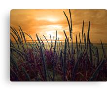 MY BEAUTIFUL BEACH Canvas Print
