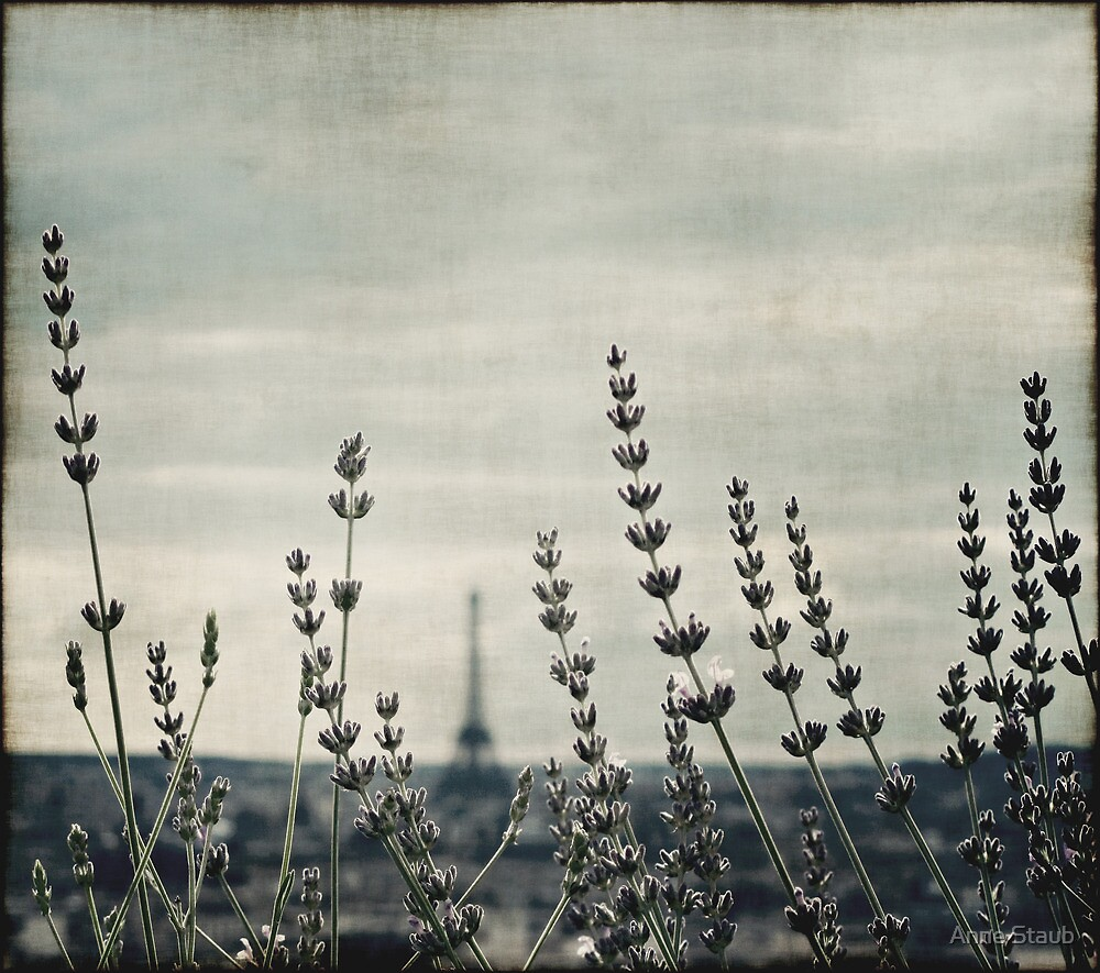 French Lavender III by Anne Staub