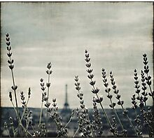 French Lavender III Photographic Print