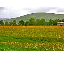 Buttercup Meadow Photographic Print
