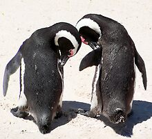 Penguins at Boulders Beach by Lynn Bolt