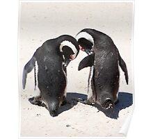 Penguins at Boulders Beach Poster