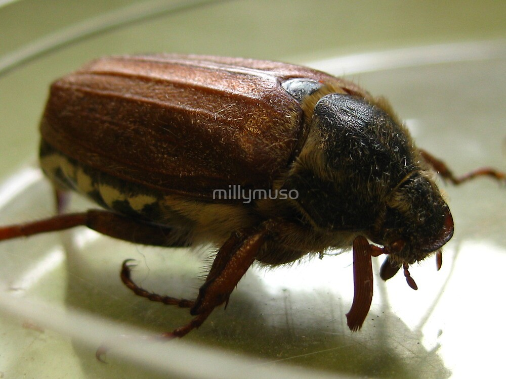 May bug2 by millymuso