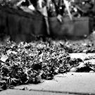 Flurry of Leaves by Rinaldo Di Battista