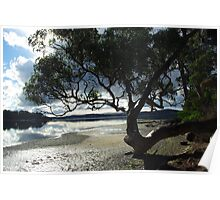 Tree with a curved trunk - St Helens, Tasmania Poster
