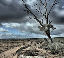 Drought & Salt Kills by Larry Lingard-Davis