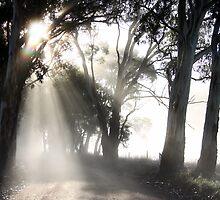 ~ Sun Burst ~ by LeeoPhotography