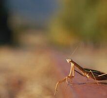Mantis - Autumn in the Derwent Valley, Tasmania. by Lewis Farrell