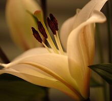 Sleeping Lily  by vbk70