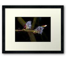 Jewels & Fur Framed Print