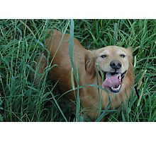 Bella in the field Photographic Print