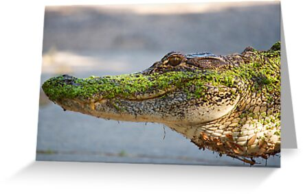 Gator up Close and Personal by TJ Baccari Photography
