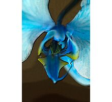 Blue Ribbon Photographic Print