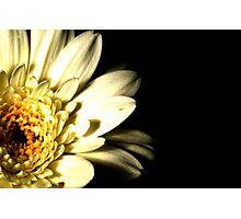 Floral 13 Photographic Print