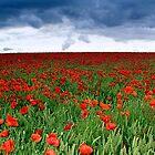 The Poppyfield by Bruce THOMAS