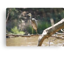 Water Fowl Canvas Print