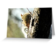 Central Park Squirrel Greeting Card