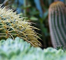 Cacti by stay-focussed