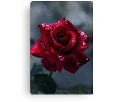 First Rose Canvas Print