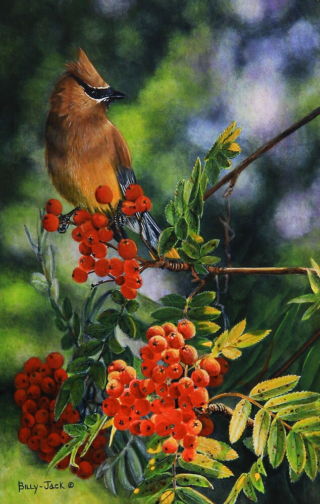 Cedar's Perch by Billy-Jack  Milligan