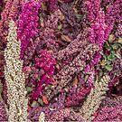 Quinoa by DianaC