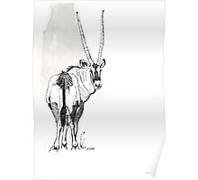 Typical of the Gemsbok Poster