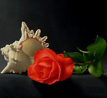 Rose and Shell by Paul Coventry-Brown