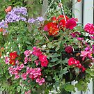 My Latest Hanging Basket by katymckay