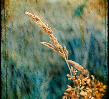 Grass by Silvia Ganora