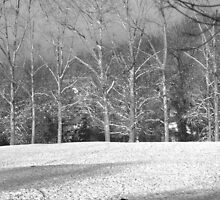 Dog in the snow, black and white conversion. by Nick  Gill